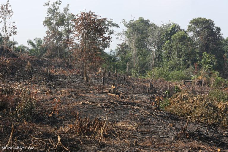 Para ahli mengatakan upaya Indonesia untuk mengendalikan deforestasi masih jauh dari tujuan