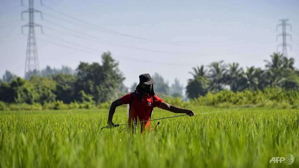 Komentar: mengapa petani Indonesia bisa punah dalam waktu sekitar 40 tahun