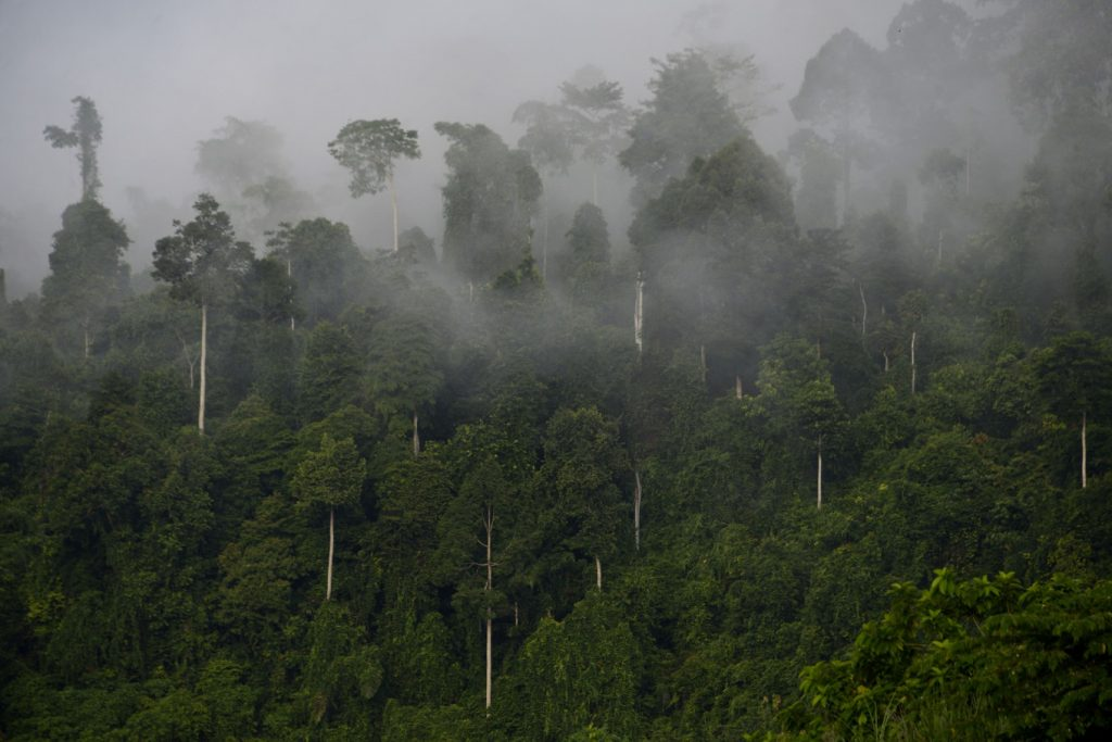 UK, Indonesia spur global efforts to increase sustainable trade and protect forests