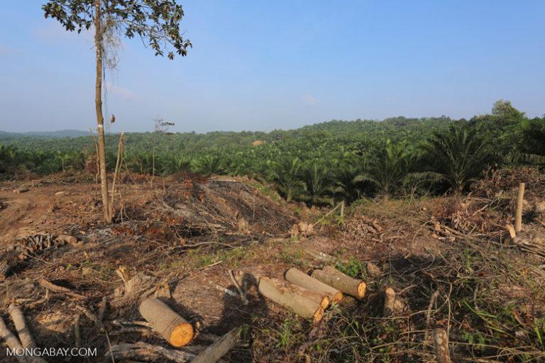 Indonesia mempertaruhkan biofuel daripada minyak, tetapi kendaraan listrik bisa membuat keduanya diperdebatkan