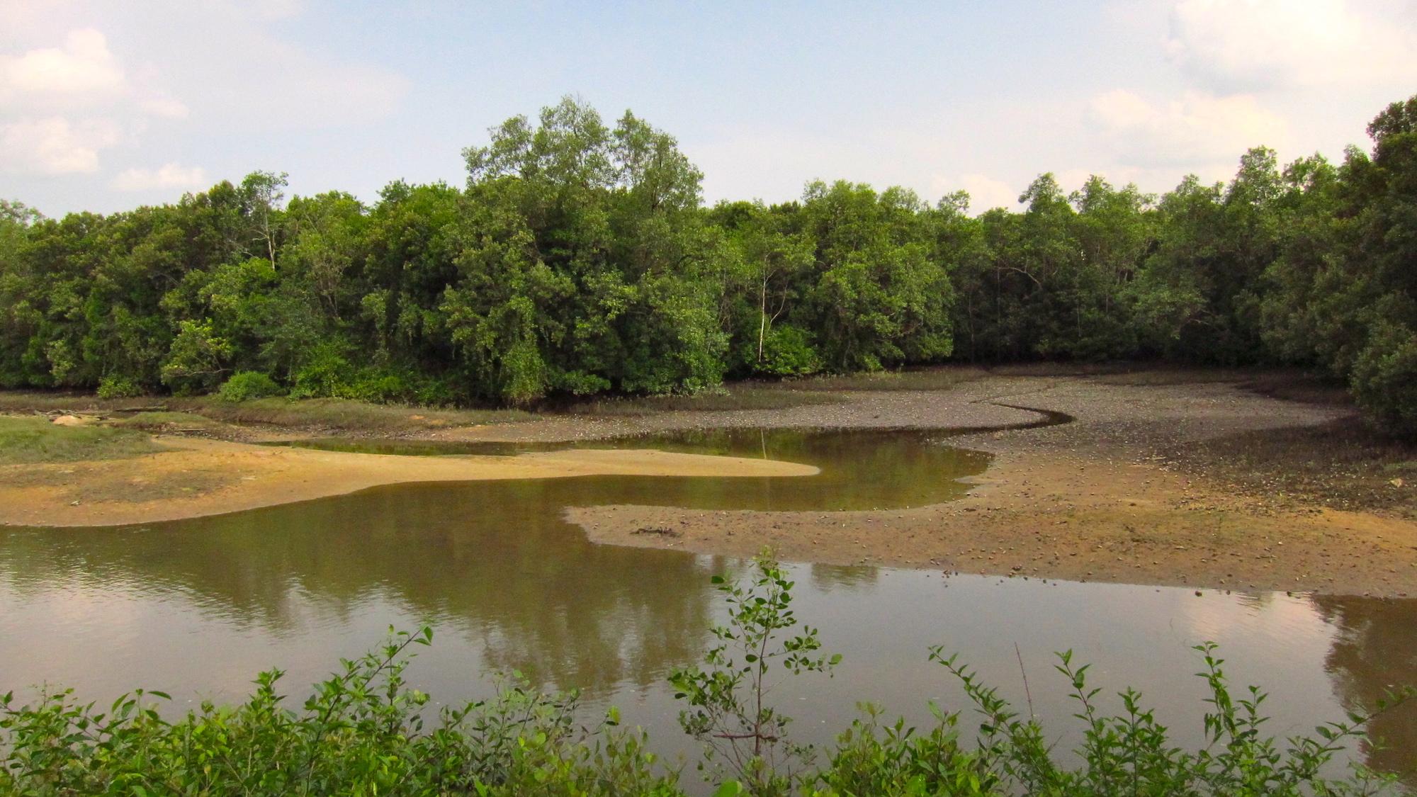Dataran lumpur yang terbuka saat air surut di Sungei Bulah Wetland Reserve menyajikan hidangan prasmanan untuk burung.  Foto oleh Qingwu Zhou melalui Wikimedia Commons (CC BY-SA 3.0).