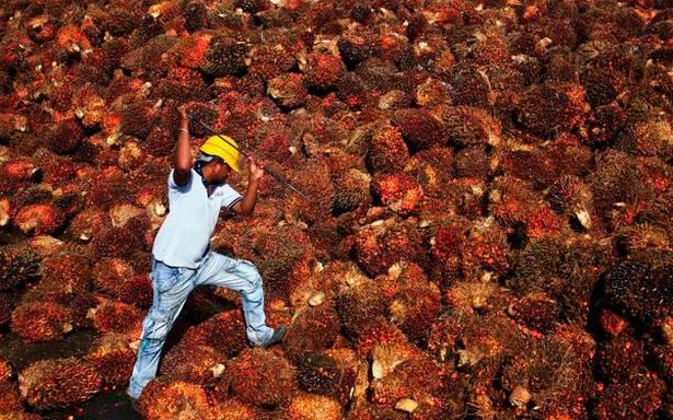 Apa arti usulan penanaman kelapa sawit dalam skala besar bagi lingkungan dan ekonomi India?