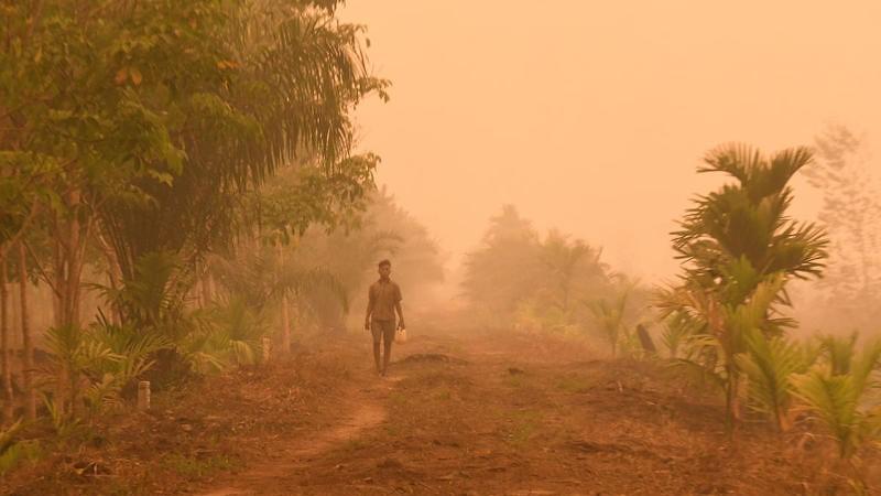 Indonesia mengakhiri kesepakatan perlindungan hutan dengan Norwegia, meningkatkan kekhawatiran akan deforestasi